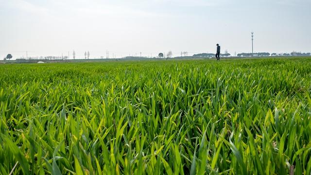 重磅:中央一号文件  农村土地可担保融资 不搞私有化