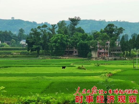 城坝遗址:稻田下的神秘古皇城 巴文化的最后消失地